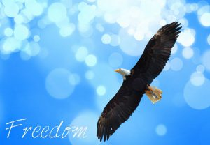 Finacial Freedom